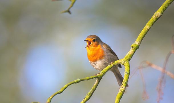 Gartenvögel.jpg