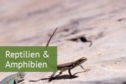 Reptilien-Amphibien.jpg