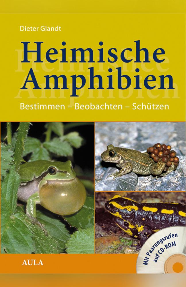 amphibien.jpg