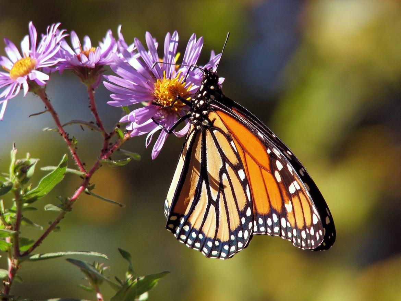 butterfly-17057_1920.jpg
