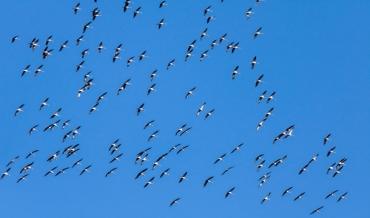 Buchankündigung: Das große Buch des Vogelzugs
