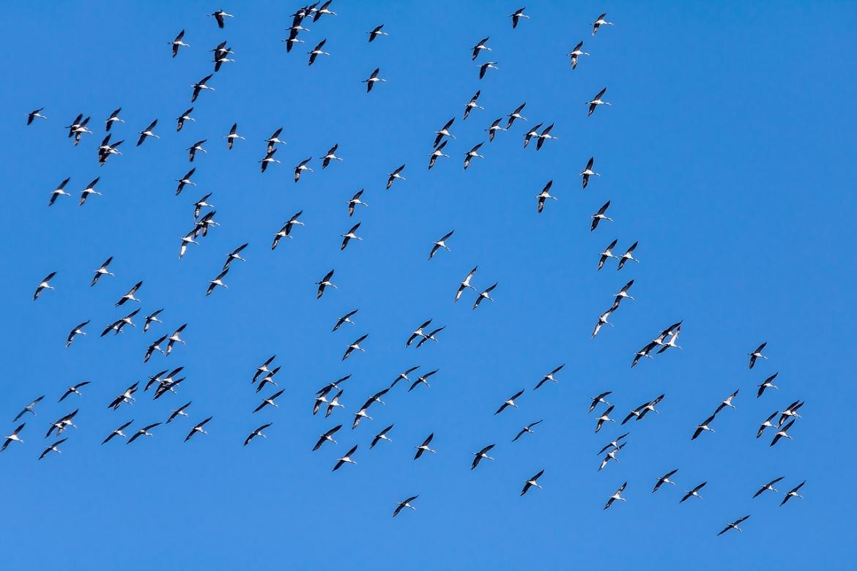 birds-4024243_1280.jpg